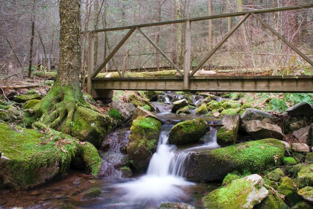 60 Hikes Within 60 Miles: Harrisburg, Bullfrog Pond, Matt Willen, Harrisburg hiking, Hemlock Natural Areas Loop