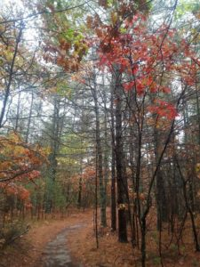 60 Hikes Within 60 Miles: Boston, Lafe Low, hikes near Boston,