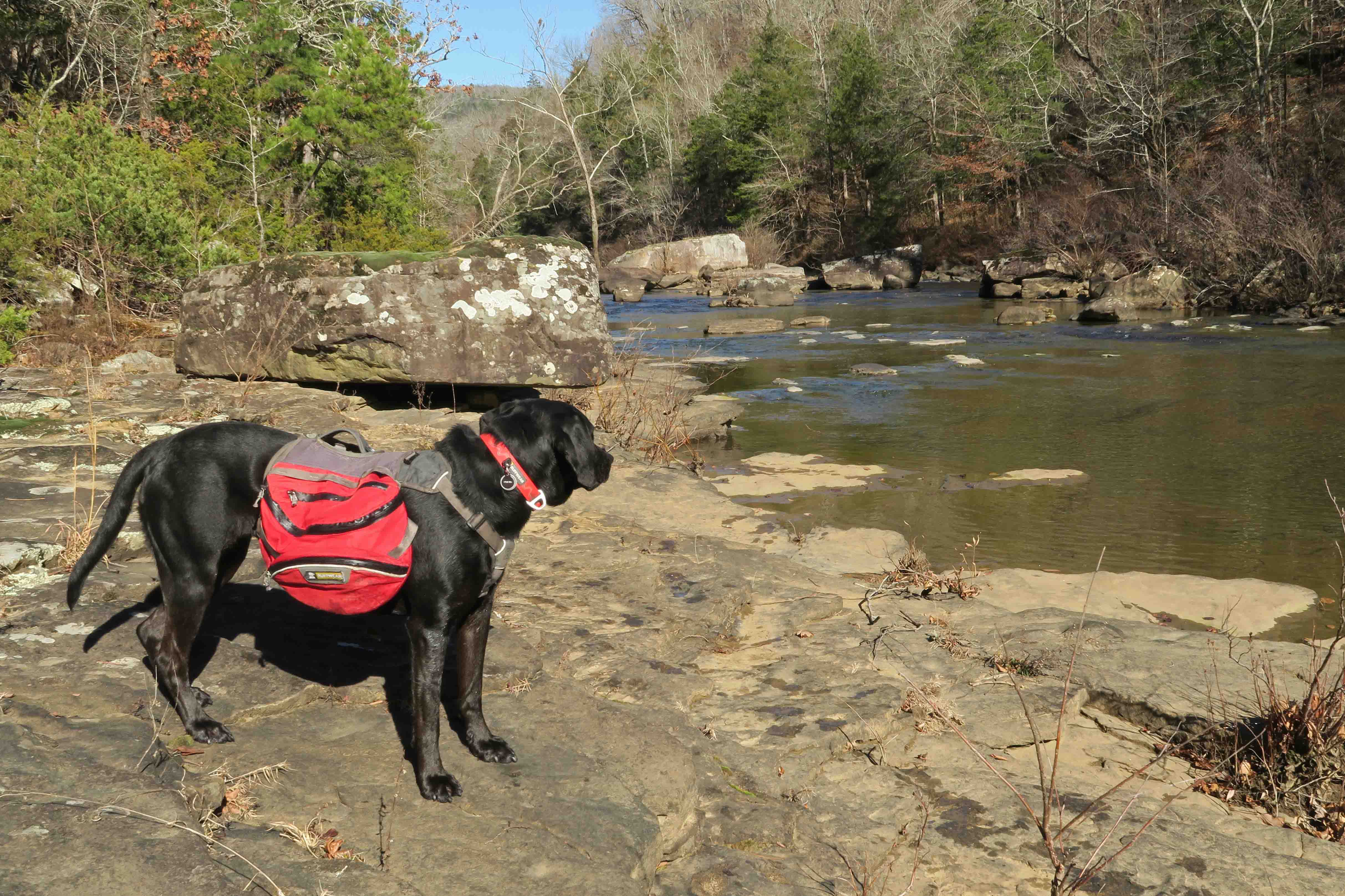 Five-Star Trails: The Ozarks, Hurricane Creek, Jim Warnock, Hiker-dog