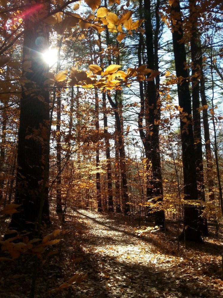 60 Hikes Within 60 Miles: Boston, Lafe Low, hikes near Boston
