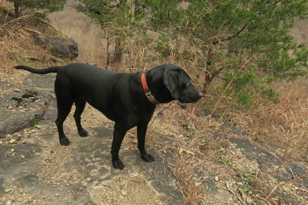 Five-Star Trails: The Ozarks, Jim Warnock, Hiker-dog, hiking in the Ozarks