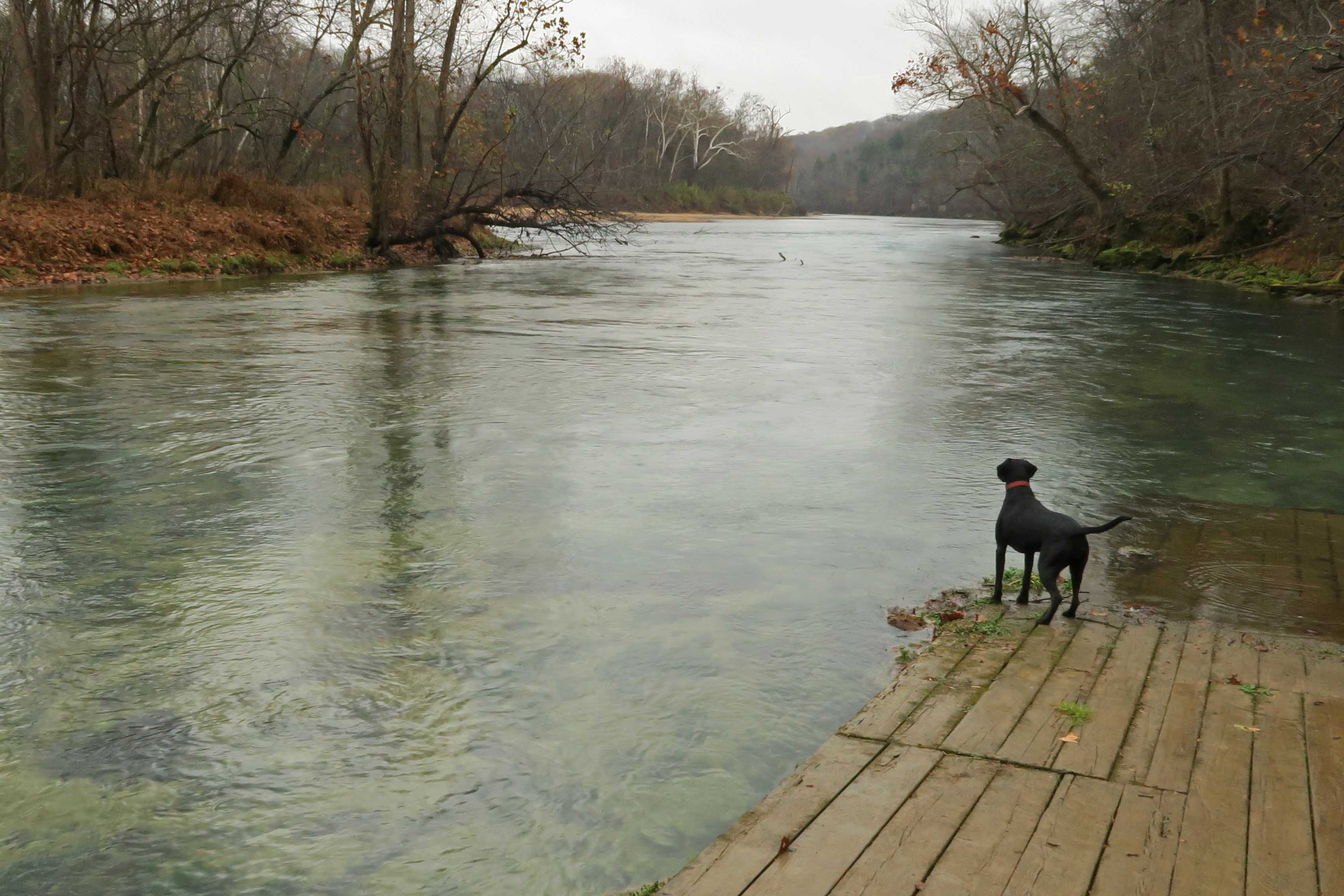 Five-Star Trails: The Ozarks, Jim Warnock, Hiker-dog, hiking in the Ozarks