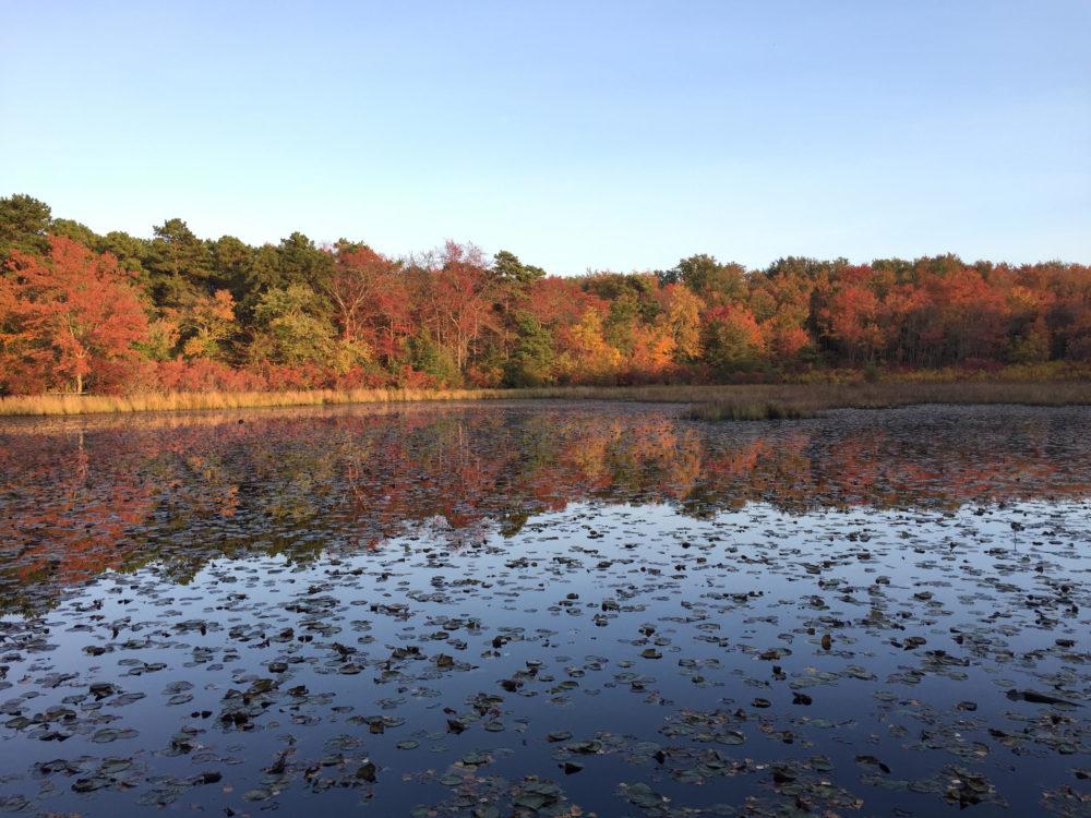 60 Hikes Within 60 Miles: Philadelphia, Lori Litchman, best fall hikes near Philadelphia