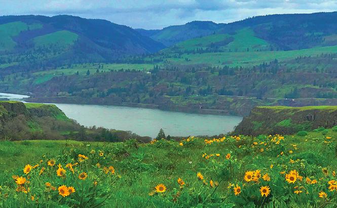 60 Hikes Within 60 Miles: Portland, Paul Gerald, Eagle Creek Fire