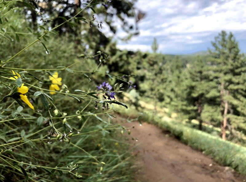 60 Hikes Within 60 Miles: Denver, Mindy Sink, Menasha Ridge Press, Betasso Preserve