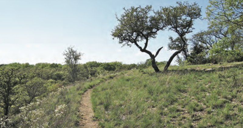 Hiking in Dallas, Thanksgiving Dallas Hikes, 60 Hikes Within 60 Miles: Dallas