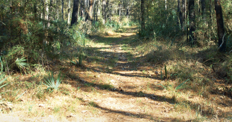 Trail running Houston, 60 Hikes Within 60 Miles: Houston
