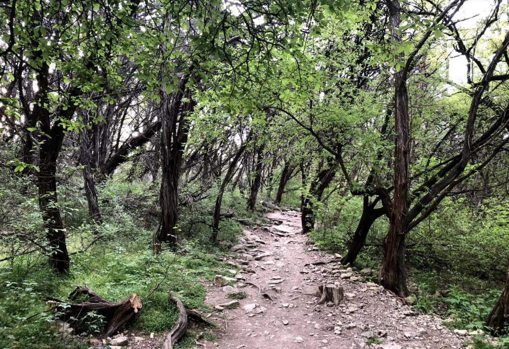 Turkey Creek Trail Austin